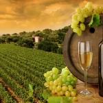 vinarije