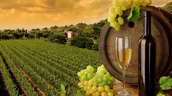 Otvoreno novo savjetovanje: Prijedlog pravilnika o nacionalnoj listi priznatih kultivara vinove loze