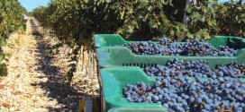 Ekološki i jako fino – Poljoprivredna zadruga 'Maslina i vino'