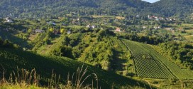 Dodatne mjere pomoći sektorima stočarstva i vinarstva