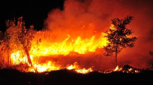 Poljoprivredni potencijal koji je stradao u požaru obnovite EU novcem – otvoren je natječaj iz mjere 5 Programa ruralnog razvoja