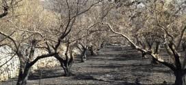 Kako financirati obnovu poljoprivrednog potencijala narušenog elementarnom nepogodom