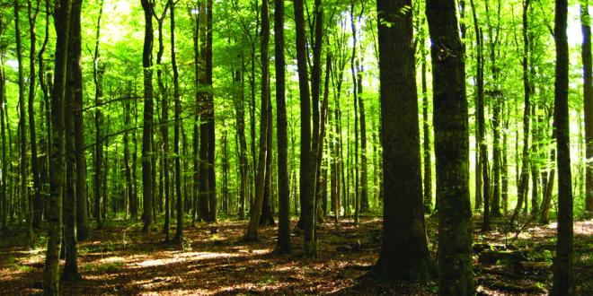 """Natječaj za tip operacije 4.3.3. """"Ulaganje u šumsku infrastrukturu"""""""