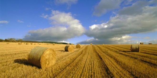 Objavljen novi Zakon o poljoprivrednom zemljištu