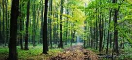 Produžen rok za operaciju 8.5.1 Konverzija degradiranih šumskih sastojina i šumskih kultura