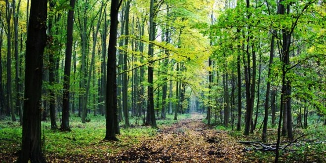 """E-savjetovanje Nacrta natječaja za provedbu tipa operacije 4.3.3 """"Ulaganje u šumsku infrastrukturu"""""""