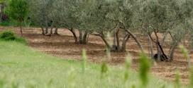 Plan natječaja za Program ruralnog razvoja u 2019. godini – sva preostala sredstva stavljamo poljoprivrednicima na raspolaganje