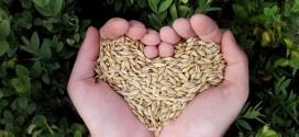 Prijave za verificirano osposobljavanje u permakulturi i urbanoj hortikulturi