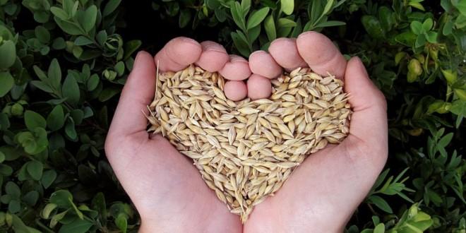 Za razvoj OPG-ova odobreno 37 milijuna kuna – potpisani ugovori s 334 poljoprivrednika