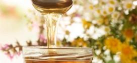 Nastavak Programa Školski medni dan s hrvatskih pčelinjaka za 2020. godinu