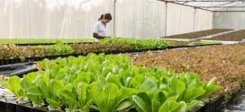 Objavljen 9. natječaj za TO 4.1.1 »Restrukturiranje, modernizacija i povećanje konkurentnosti poljoprivrednih gospodarstava« – ulaganja u proizvodnju povrća u zaštićenom prostoru – plasteniku