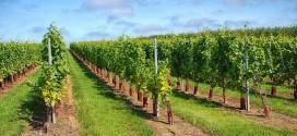 Dodjela kvote za kriznu mjeru skladištenja vina