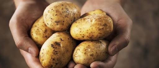 """Objavljen natječaj za operaciju 4.1.1. """"Restrukturiranje, modernizacija i povećanje konkurentnosti poljoprivrednih gospodarstava"""" – ulaganja u skladišne kapacitete za krumpir"""
