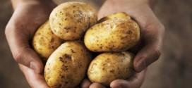 Produžen rok za podnošenje zahtjeva za potporu za tip operacije 4.1.1. za ulaganja u skladišne kapacitete za krumpir