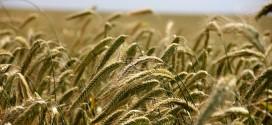 Objavljen Pravilnik o izmjenama i dopuni Pravilnika o provedbi programa potpore primarnim poljoprivrednim proizvođačima u sektoru biljne proizvodnje i sektoru stočarstva u 2020. godini