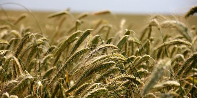 Program potpore primarnim poljoprivrednim proizvođačima u sektoru biljne proizvodnje i sektoru stočarstva u 2020. godini – dodatne informacije